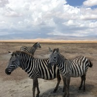 Planning a Safari in East Africa
