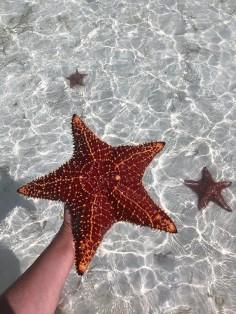 {Starfish on boat charter around Harbour Island}