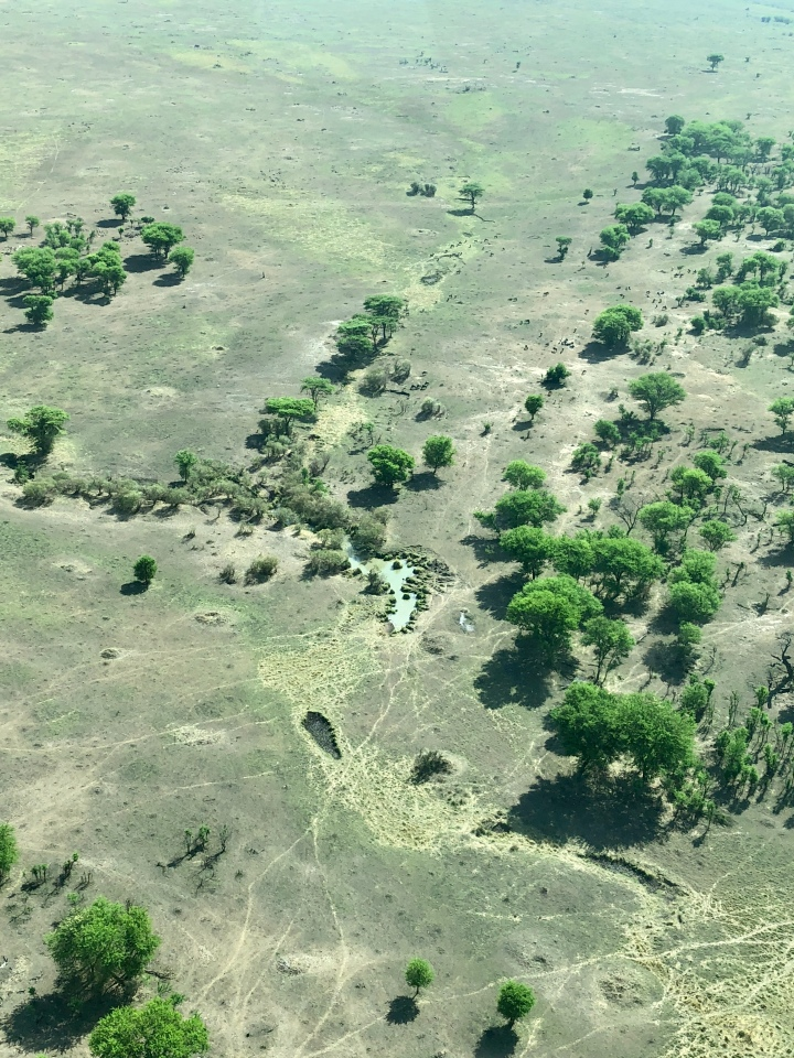 aerial views of serengeti