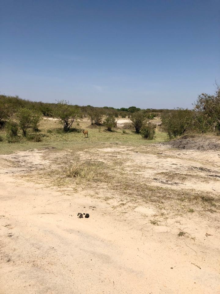 First animal sighting of the safari