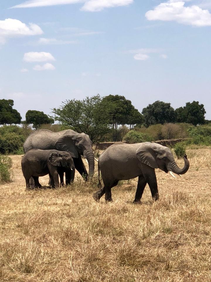 Elephant sighting on safari in serengeti