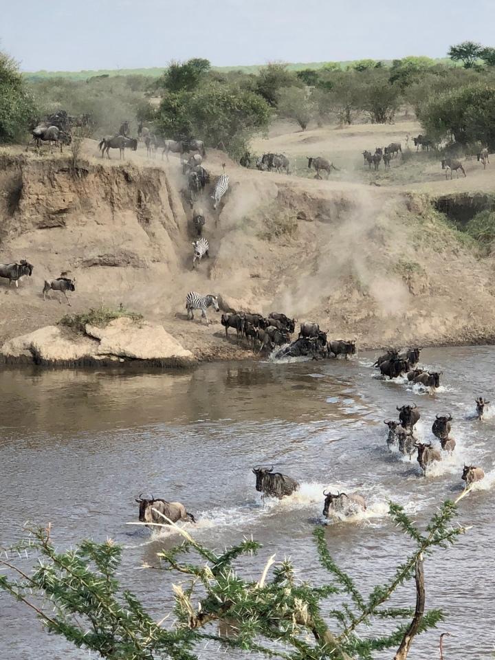Honeymoon Part II: Tanzania Safari in theSerengeti