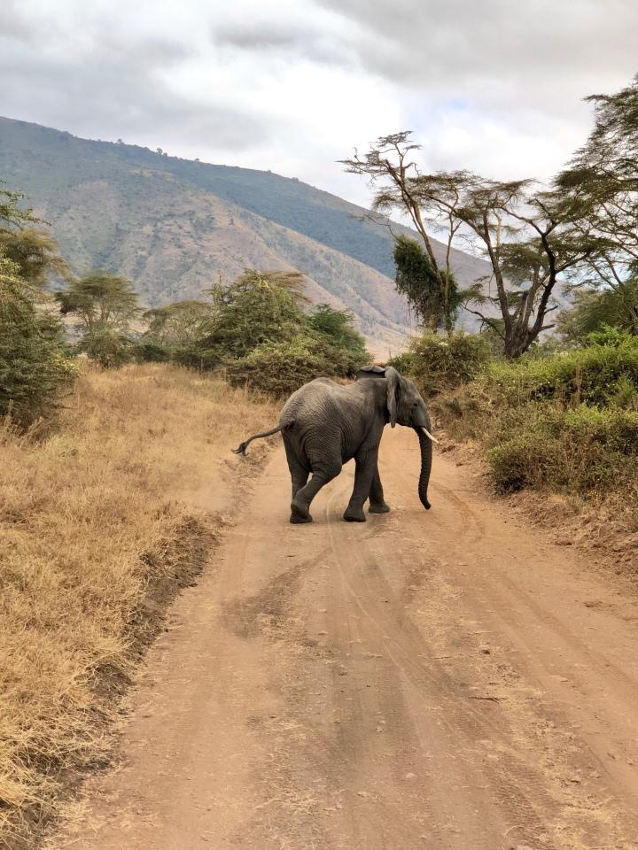 Honeymoon Part III: Tanzania Safari in NgorongoroCrater